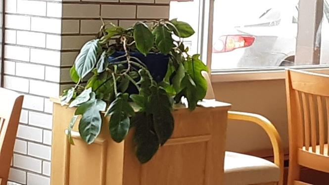 cherri's plant 2019