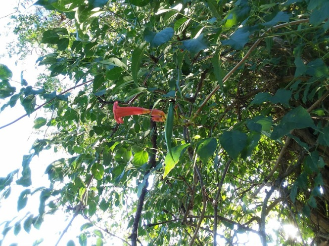 SC vine plant 3-16-19