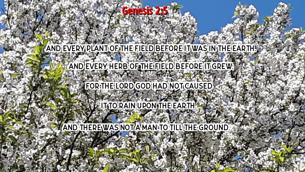 Genesis 2-5 5-19-19